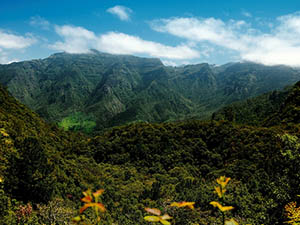 The lush landscape of Madeira