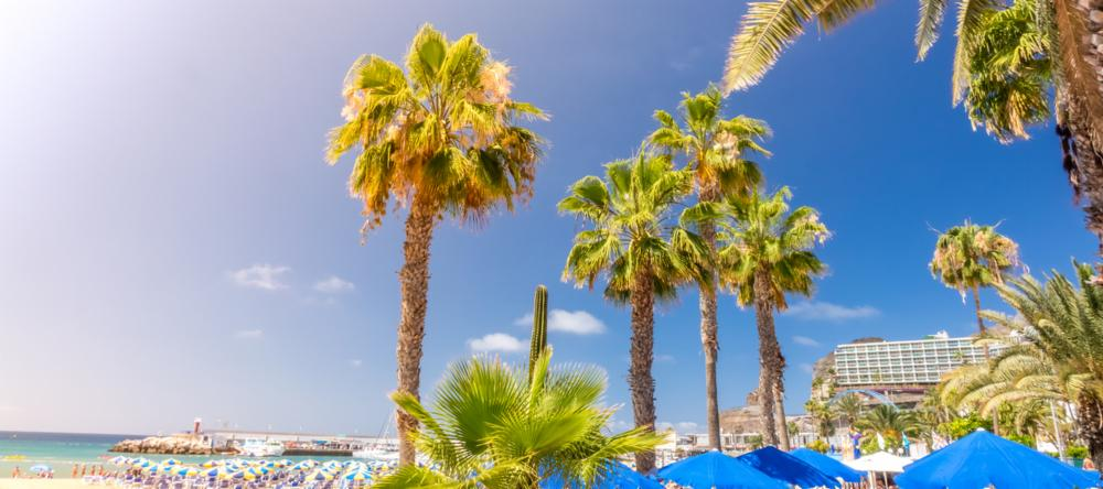 Palm trees in Puerto Rico, Gran Canaria