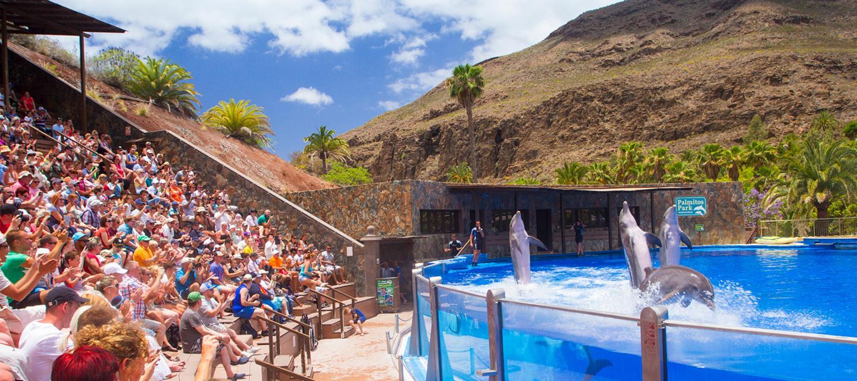 Dolphin show in Palmitos Park in Gran Canaria