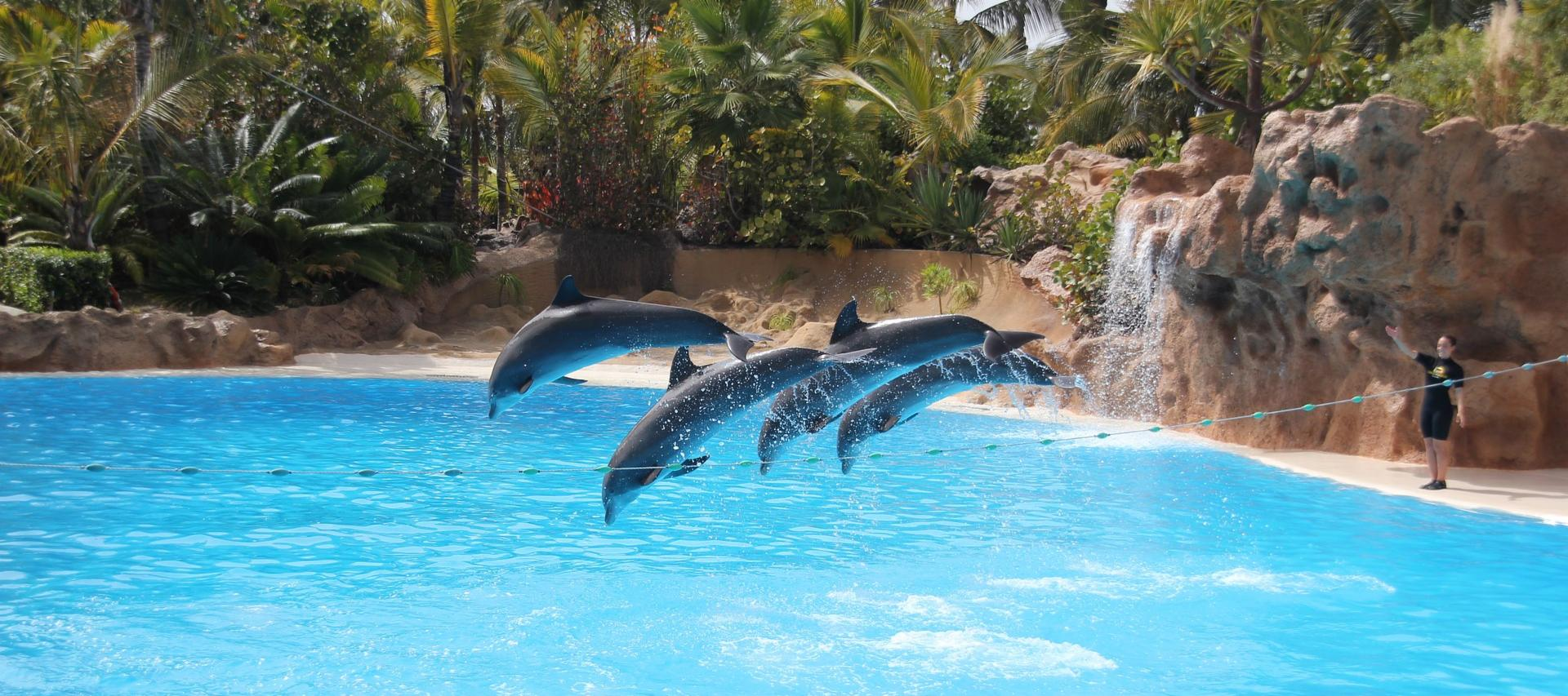 Dolphin Show in Loro Parque in Tenerife