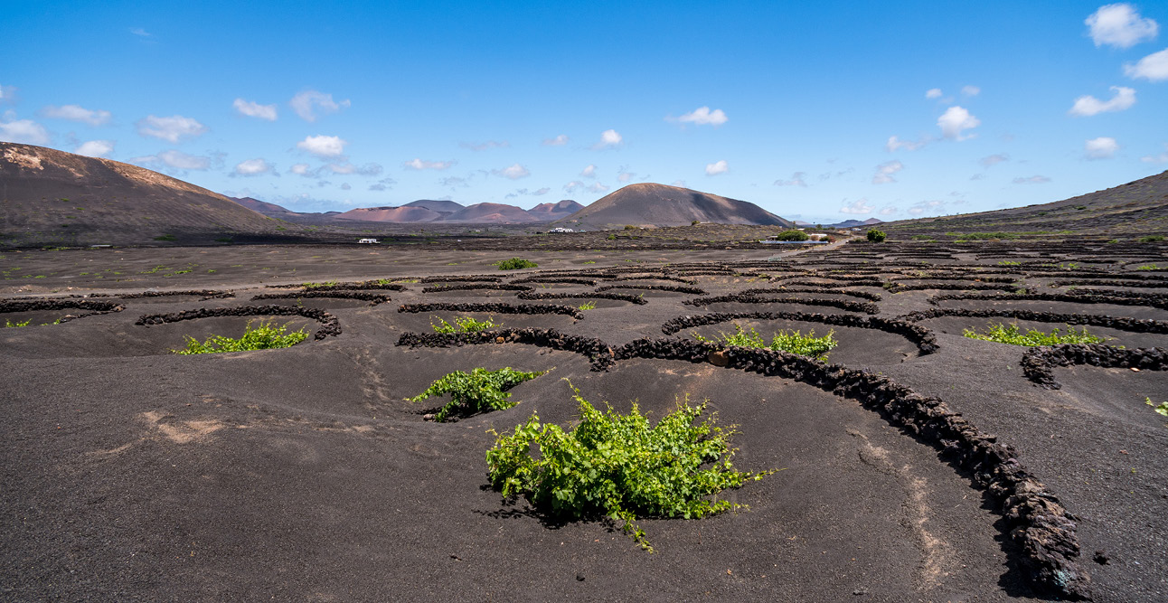 La Geria Vineyard in Lanzarote | 7 Reasons to Visit Lanzarote