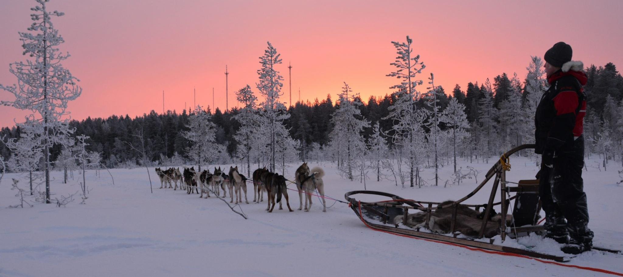 Husky Park in Lapland